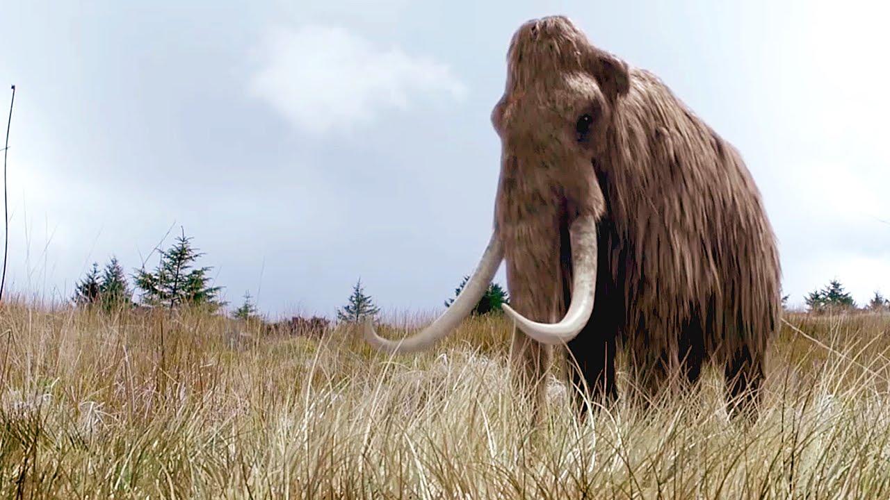 DOKU: Wiedergeburt des Mammuts - DNA ermöglicht Erzeugung eines Klons | Dokumentation 2015 Deutsch