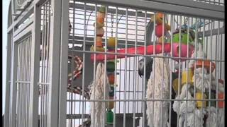 Video Ziggy In His Cage: A Video by Nathan Meister download MP3, 3GP, MP4, WEBM, AVI, FLV September 2017