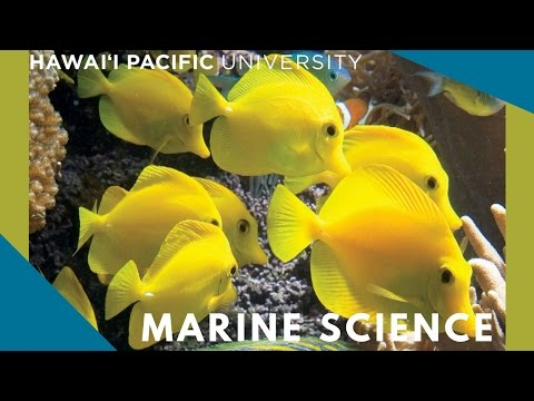 hawaii-pacific-university-marine-science-program