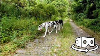 Perros en realidad virtual | Episodio #118