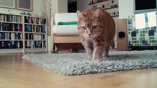 Ertappt! Lustiges Katzen-Video von Rackern allein daheim