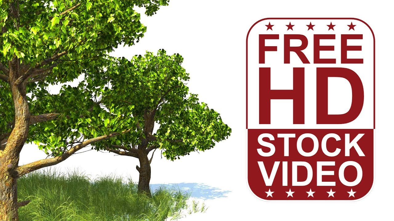 Free Stock Videos – 3D animated tree and grass - American ...