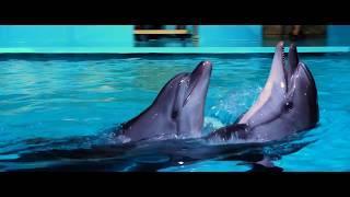Цирковое шоу 'Созвездие Дельфин'
