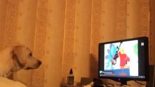 Собака Лета смотрит мультфильм
