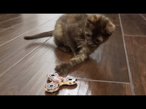 KITTEN PLAYS WITH FIDGET SPINNER