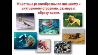 История развития зоологии  Современная зоология