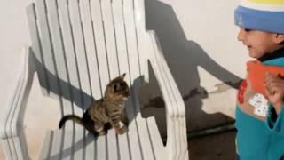 Sadi Cat