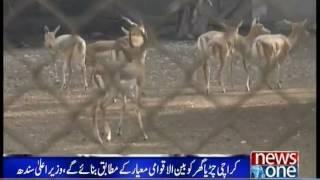 vuclip Sindh CM declares to maintain Karachi zoo at international standards