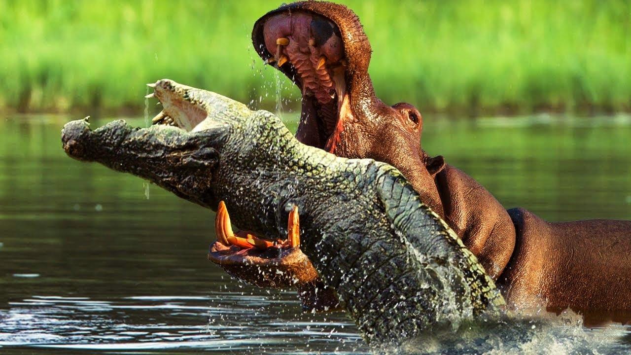 Top 10 Animales Que se ODIAN Entre Ellos