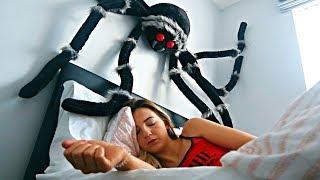 GIANT SPIDER PRANK ON SLEEPING GIRLFRIEND
