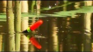 Поплавочная рыбалка.Осень .где рыба? чем кормить?*на что ловить.