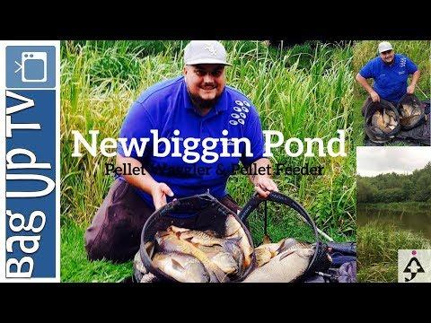Pellet Waggler & Pellet Feeder Fishing At NewBiggin Pond - BagupTV -
