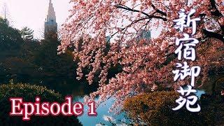 【Cherry blossoms】TOKYO. Shinjuku Gyoen, Episode 1.  2019 #4K #新宿御苑 #カンザクラ thumbnail