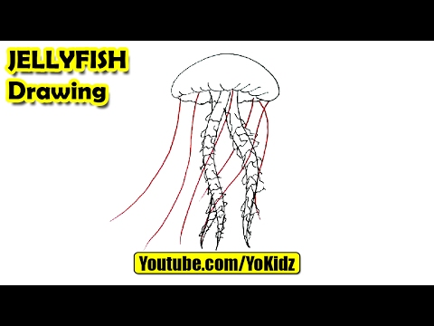 How To Draw JELLYFISH For Kids