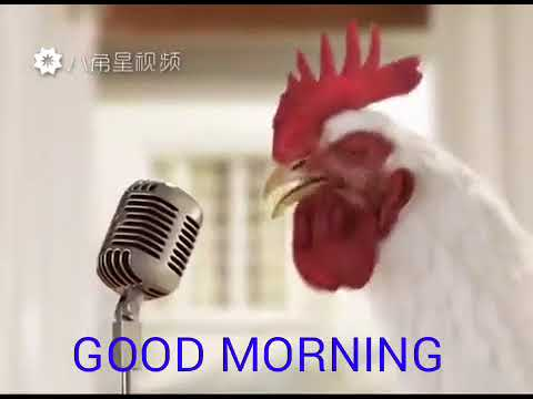 Opinion, cock in the morning