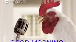 WhatsApp video cock sound good morning video