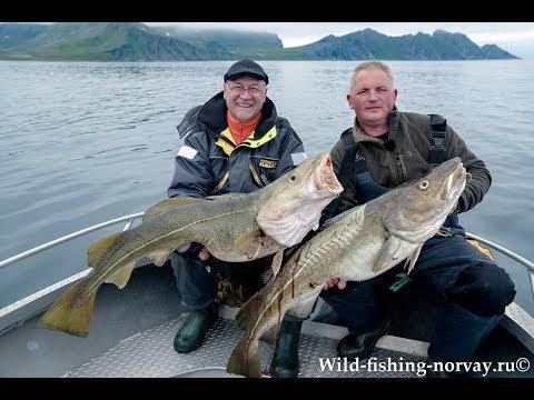 Морская рыбалка в Норвегии.Треска.Wild Fishing Norway