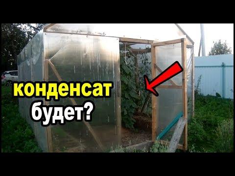 Вопрос: Нужно открывать парники с помидорами в дождливую погоду?