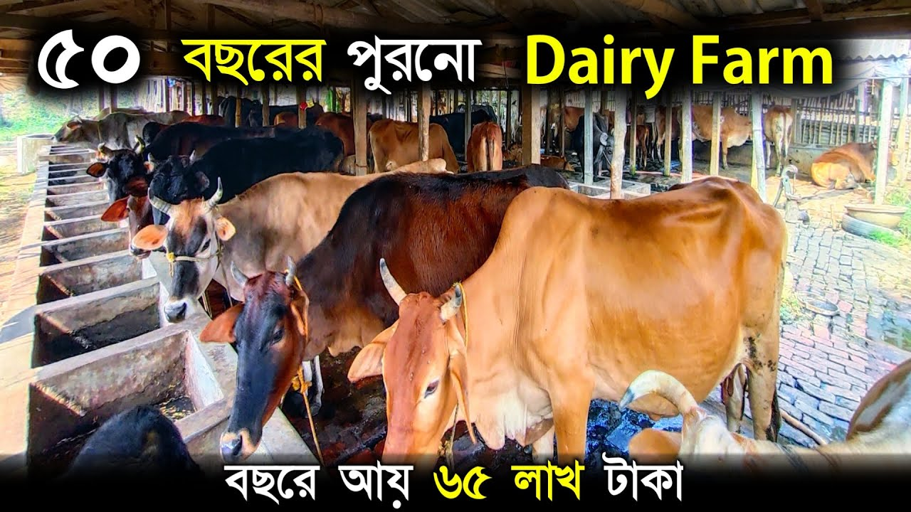 50 বছরের পুরোনো 200 টি গরুর ফার্ম | Big Dairy Farming | Modern Cow Farm in West Bengal