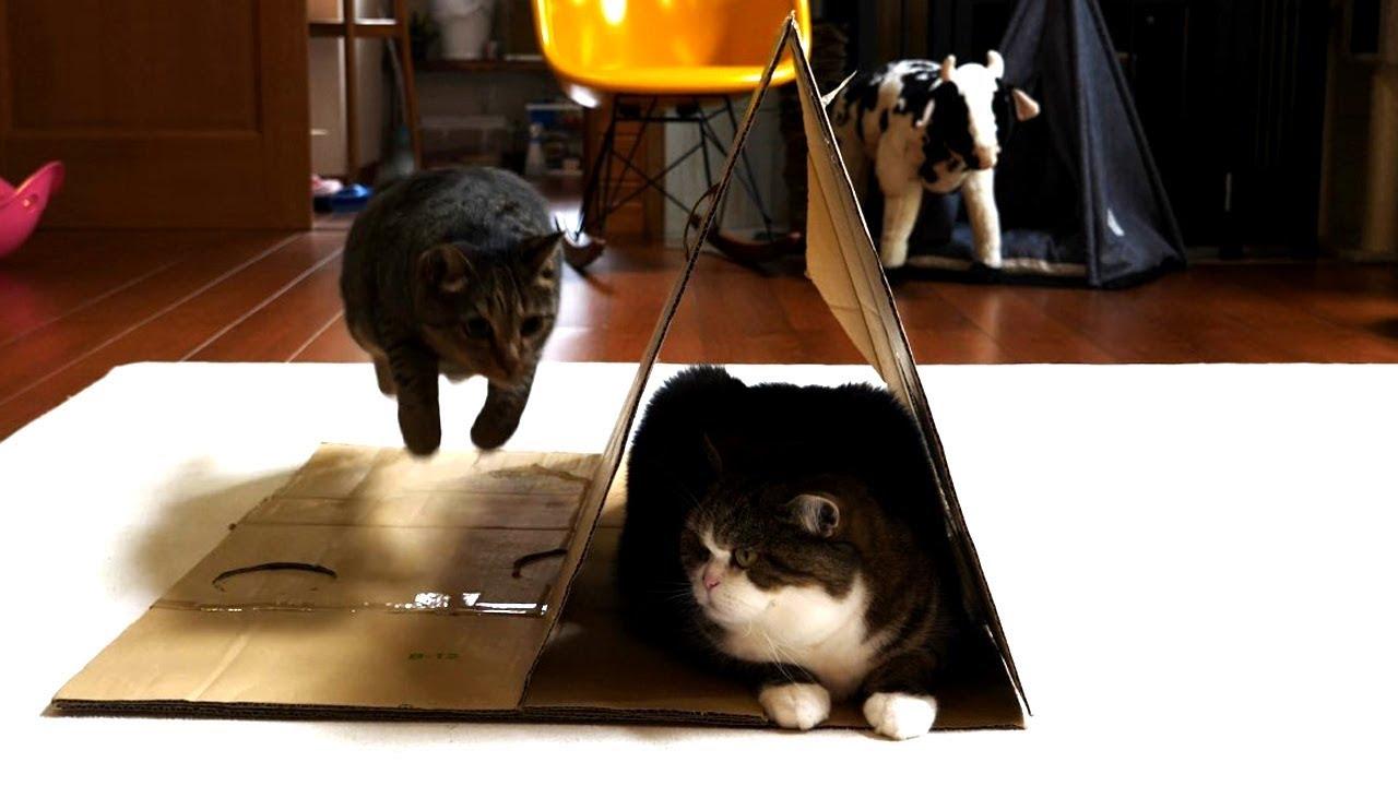 段ボールとねこ-corrugated-cardboard-and-maru