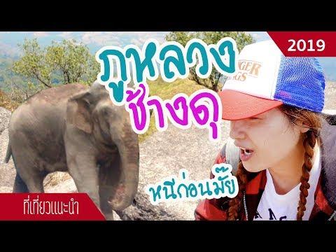 เดินป่าภูหลวง เลย ยืนหนึ่งช้างป่าดุสุดในประเทศไทย | Apr 2019 | sadoodta