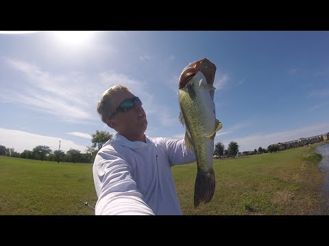 Fishing For BIG Bass, In Small Clear Water Ponds