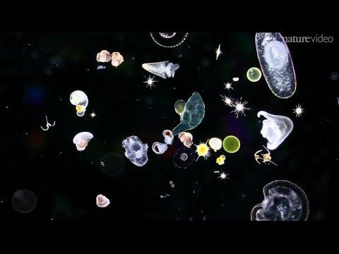 Five Reasons To Thank Plankton
