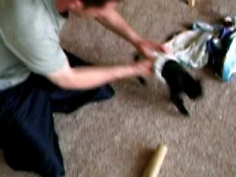old cat hisses at new cat