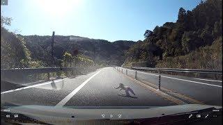 ドライブレコーダー 高速道路で猿をはねる SW20 MR2