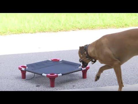 Sit Happens: Dog Training