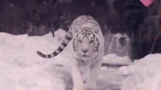 Мистические истории | Тайны животного мира
