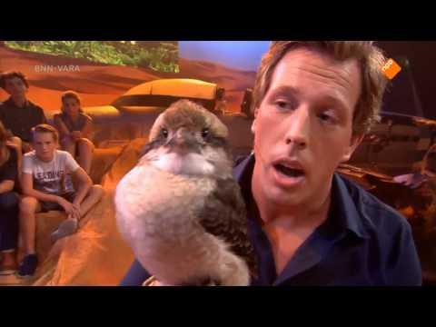 Gigi my Kookaburra on a Dutch TV Show (De Super Freek Show)