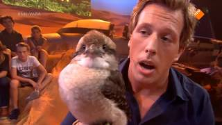 Gigi my Kookaburra on a Dutch TV Show (De Super Freek Show)