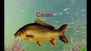 Речковая рыба! Учим рыбку разпознавать!!!
