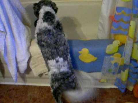 Dog Barks At Noises