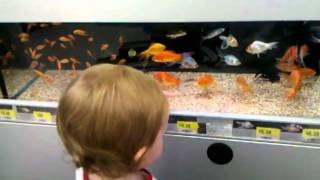 Wal Mart Fish Tanks