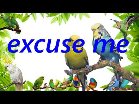 """teach parrot to talk """"excuse me"""" sound talking record 1 hours"""