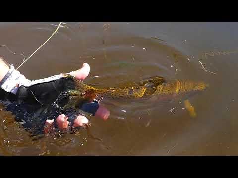 Pesca con Mosca en Córdoba, parte 1