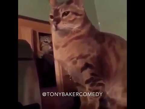 Tony Baker Cat Voiceover - Paw of Humility