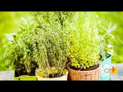 Clique e veja o vídeo Curso Cultivo Orgânico de Plantas Medicinais