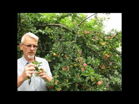 Как размножать плодовые