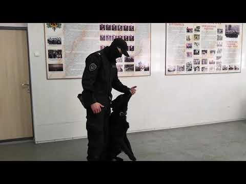 Кинолог вологодского ОМОН поделился секретами дрессировки собаки