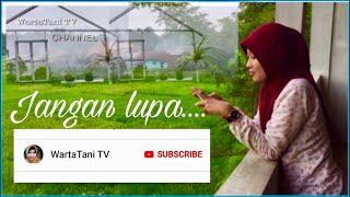 Video WartaTani TV   Warta berita perTanian Indonesia download MP3, 3GP, MP4, WEBM, AVI, FLV Juli 2018