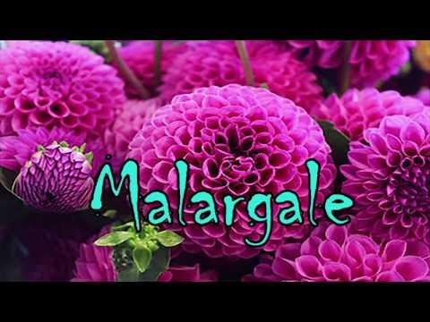 Malargale Malargale Ithu Enna Kanavaa WhatsApp Status Video