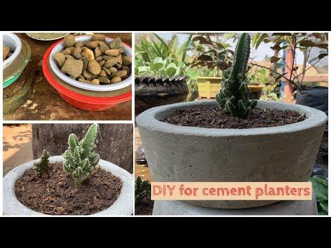 DIY concrete planter For growing 'Fairy Castle' (Cereus hildmannianus subsp. uruguayanus)