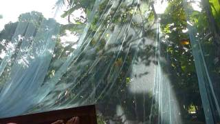 Sri Lanka,ශ්‍රී ලංකා,ceylon,mosquito Net,nice Jungle View (01)