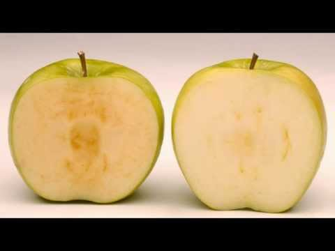 FDA Approves First GMO Apples In US