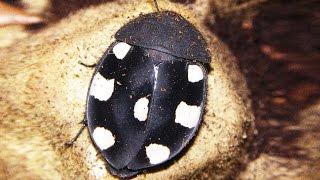 видео тараканы домашние фото