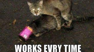 Cat sex