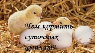 Чем кормить суточных цыплят?(, 2016-03-03T19:04:14.000Z)